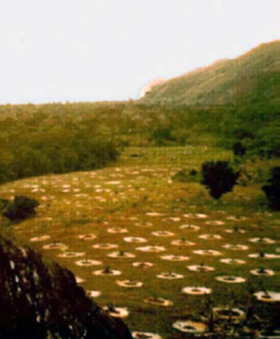 Plantação de coqueiros em 1978